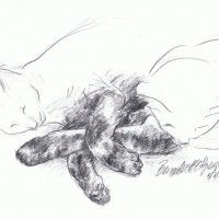 pencil sketch of two cats with crossed paws