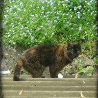 photo of tortoiseshell cat