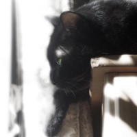 black cat in contemplation