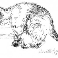 ink sketch of cat drinking water