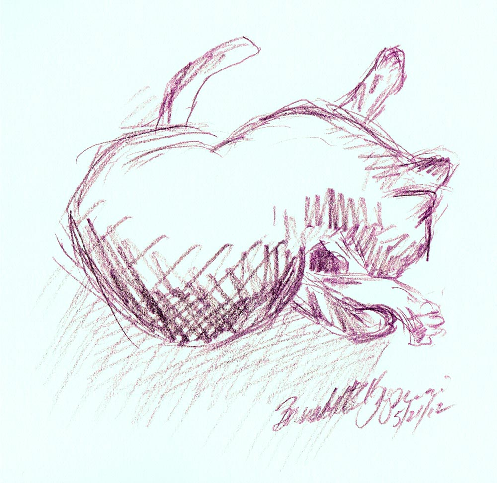 sketch of cat bathing