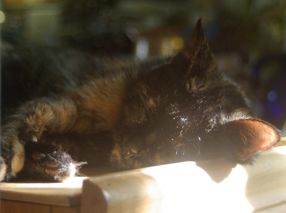 tortoiseshell cat sleeping