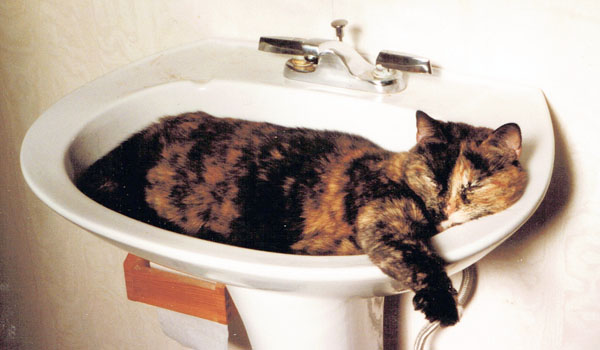 tortie cat in sink