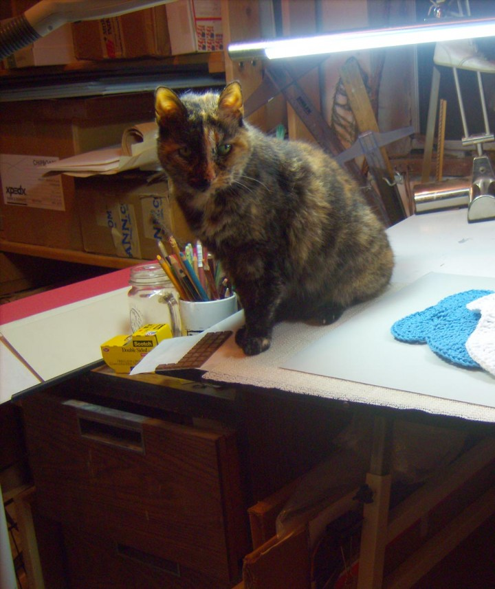 tortoiseshell cat on drawing table