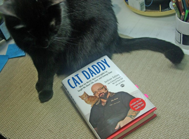 black cat with cat daddy by jackson galaxy