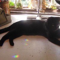 black cat on table with rainbows