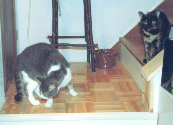 two cats on steps