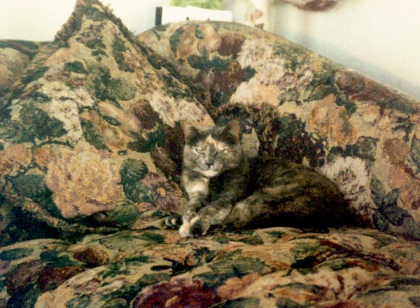 calico cat on calico couch