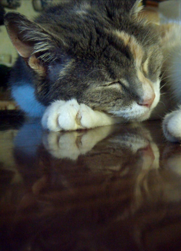 calico cat sleeping on table