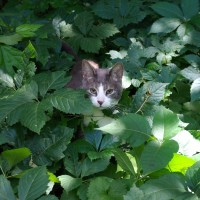 cat in weeds