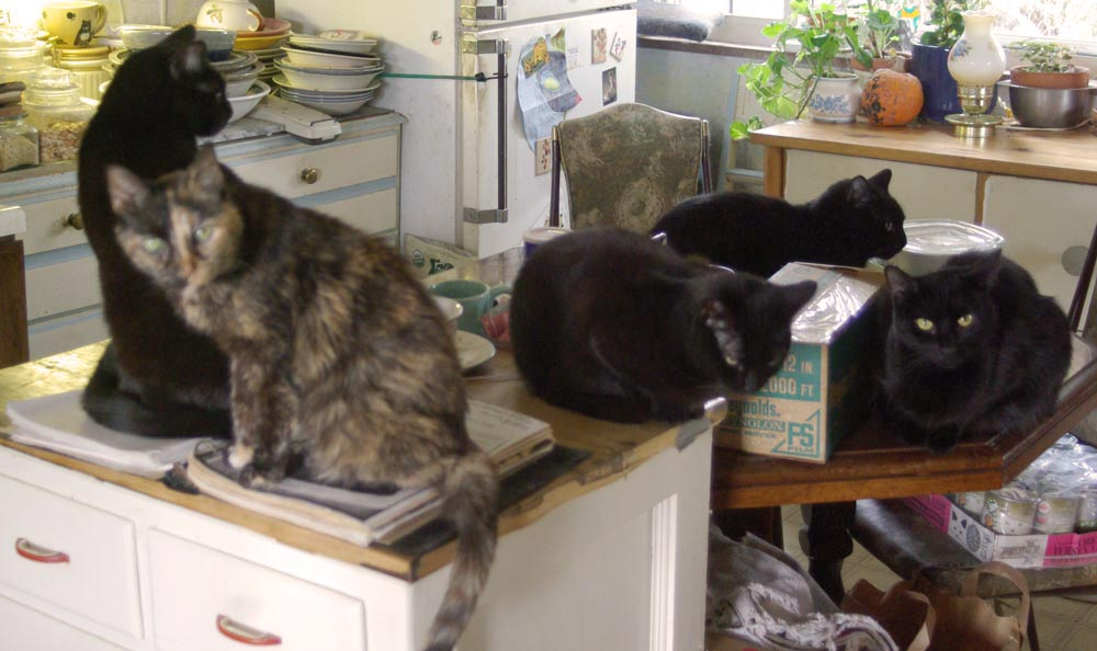 five cats in kitchen.