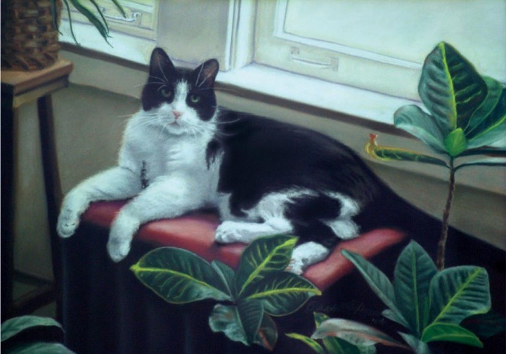 pastel portrait of black and white cat