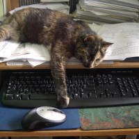 tortoiseshell cat blocking keyboard