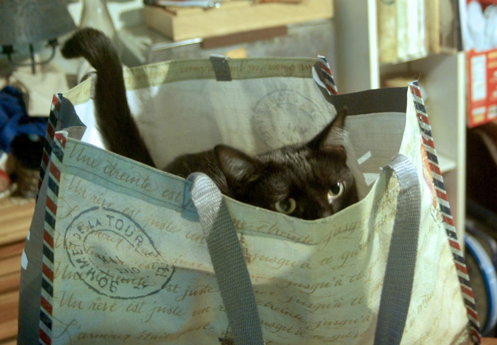 Image result for photo of cat shopping