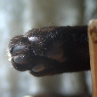 black cat toes