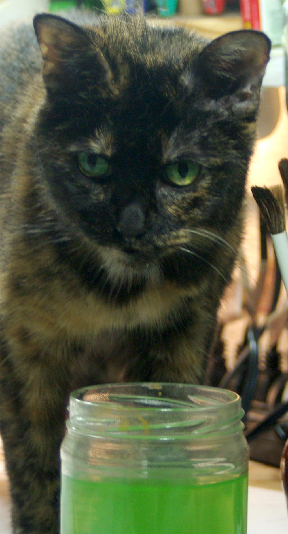 tortoiseshell cat with green water
