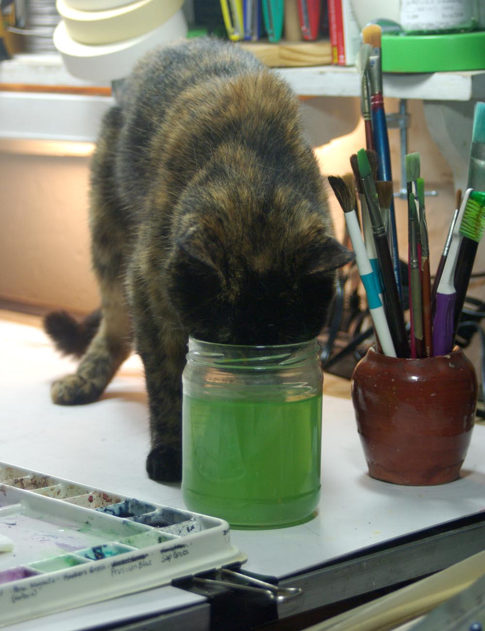 tortoiseshell cat drinking out of green water in jar