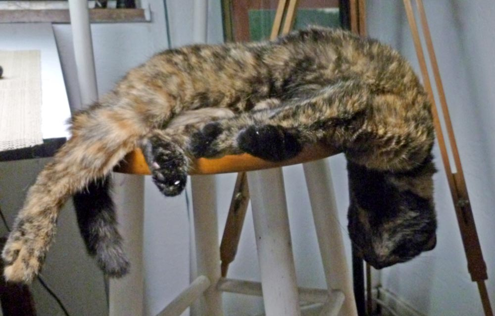 tortoiseshell cat sleeping on stool
