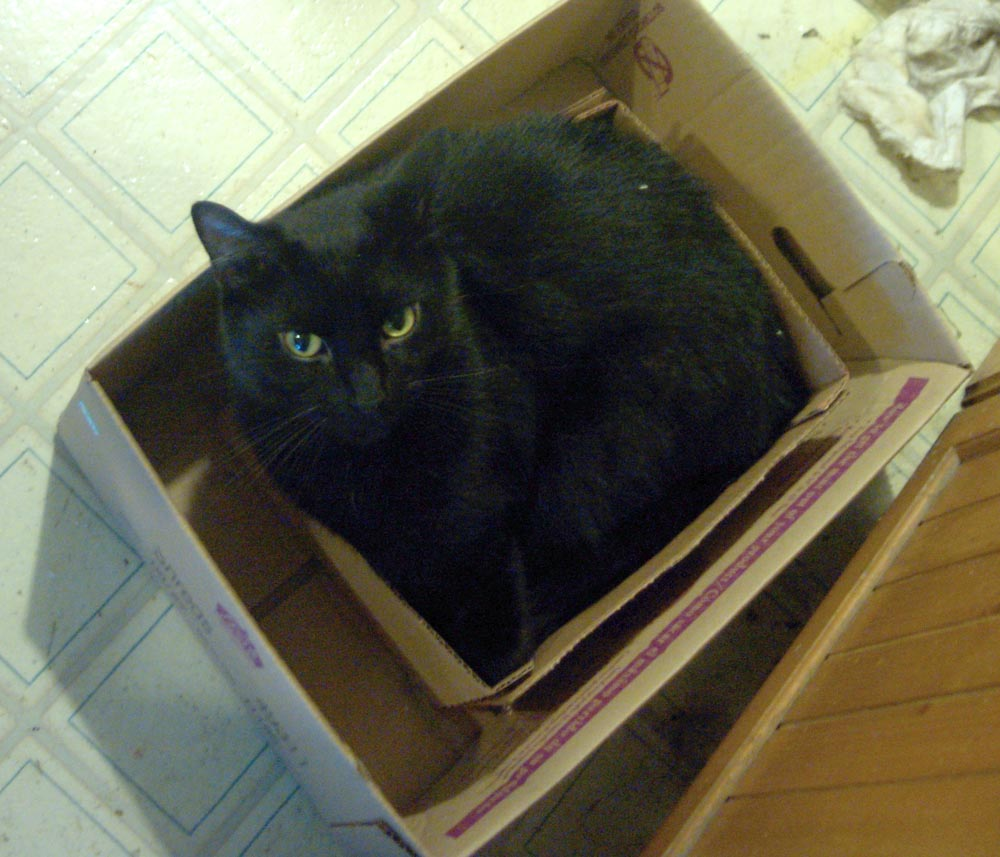 black cat in a box in a box