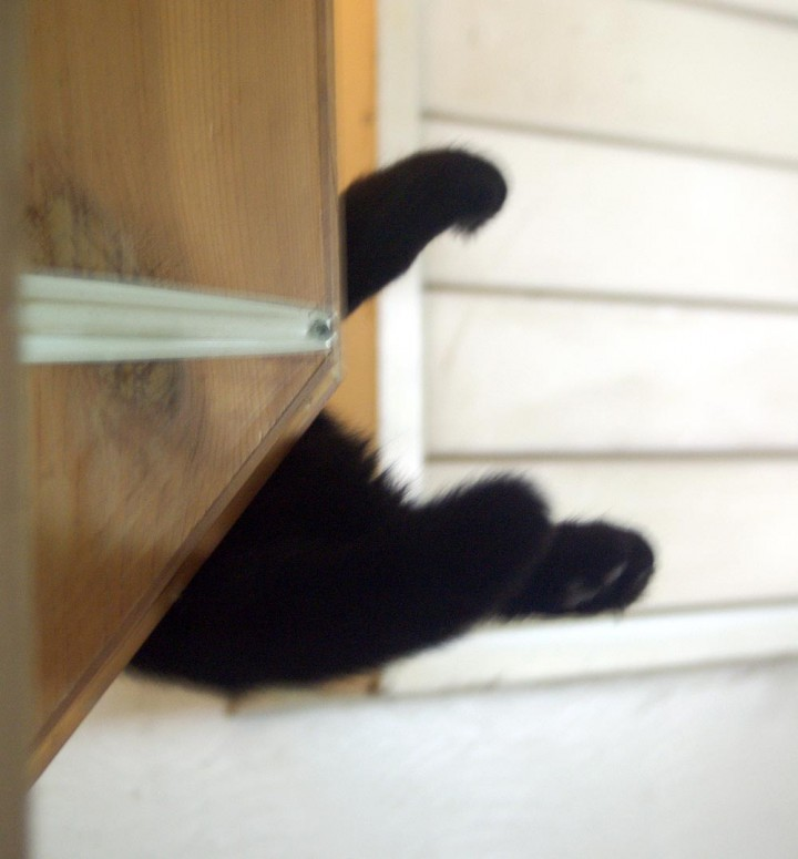 black cat paws on shelf