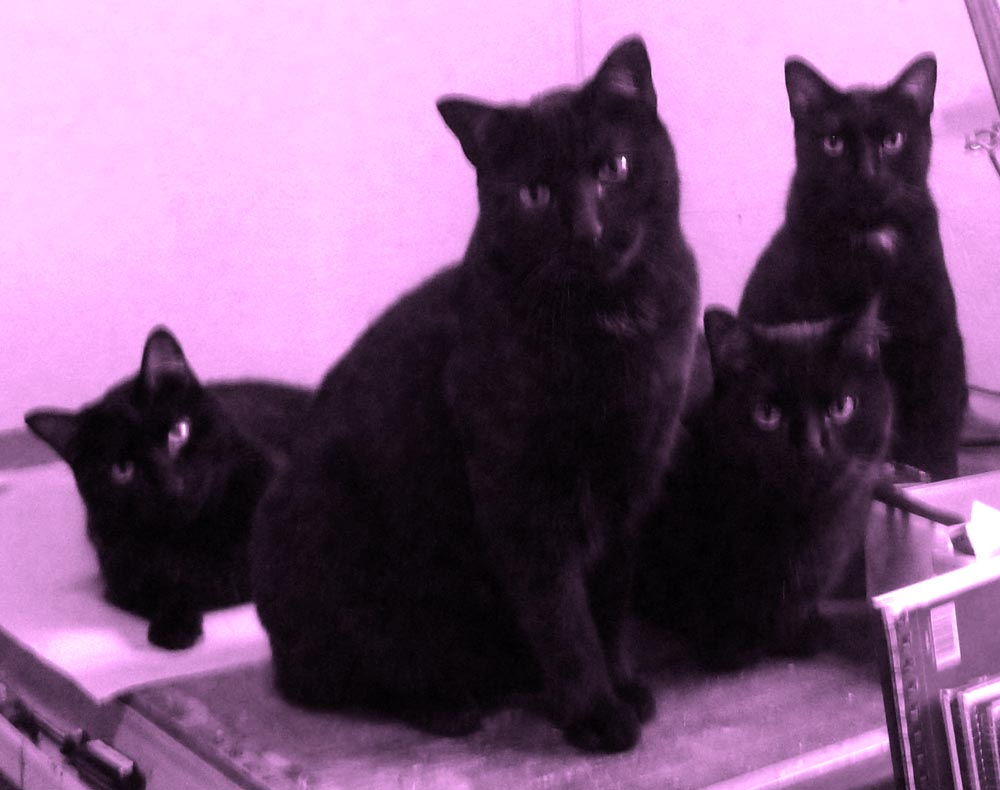 four black cats in violet light