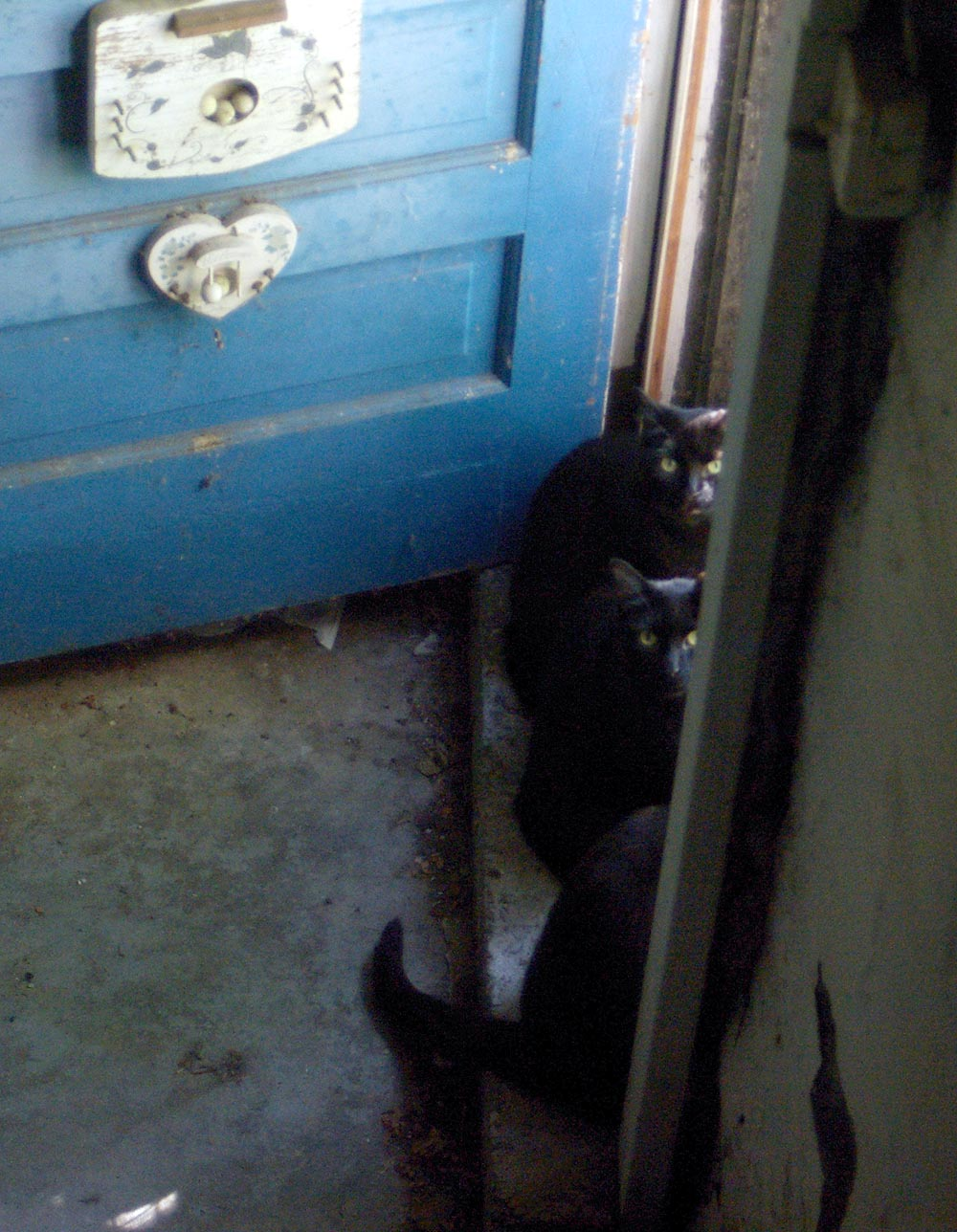 black cats and blue door
