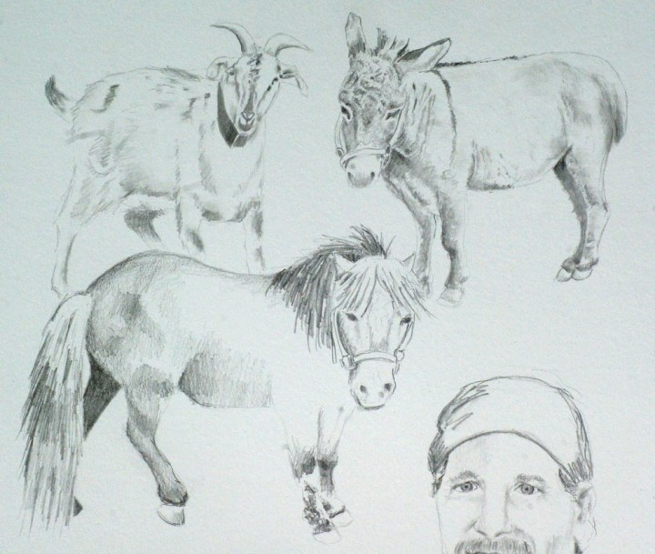 detail of portrait pencil sketch of barn animals
