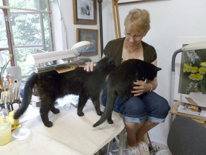 two black cats and person