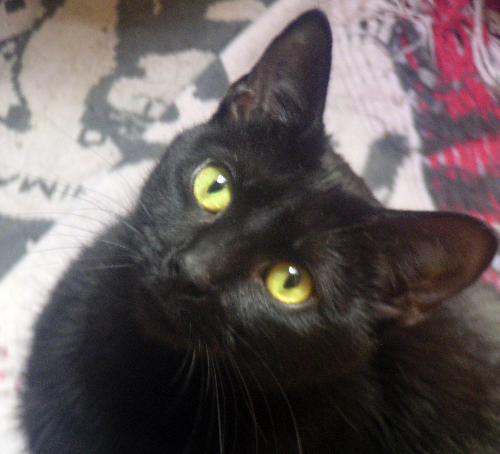 photo of black cat on patterned rug