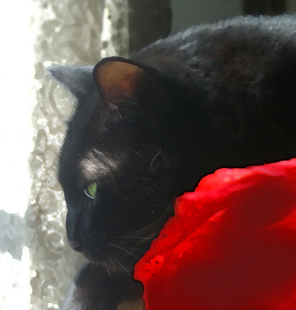 black cat with red cloth and lace curtain