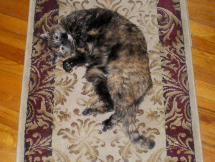 tortoiseshell cat on rug