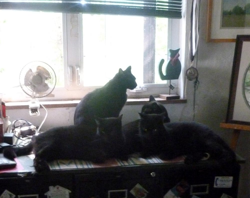 four black cats by window