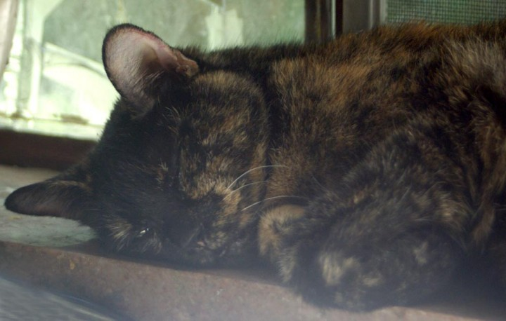 tortoiseshell cat sleeping on windowsill
