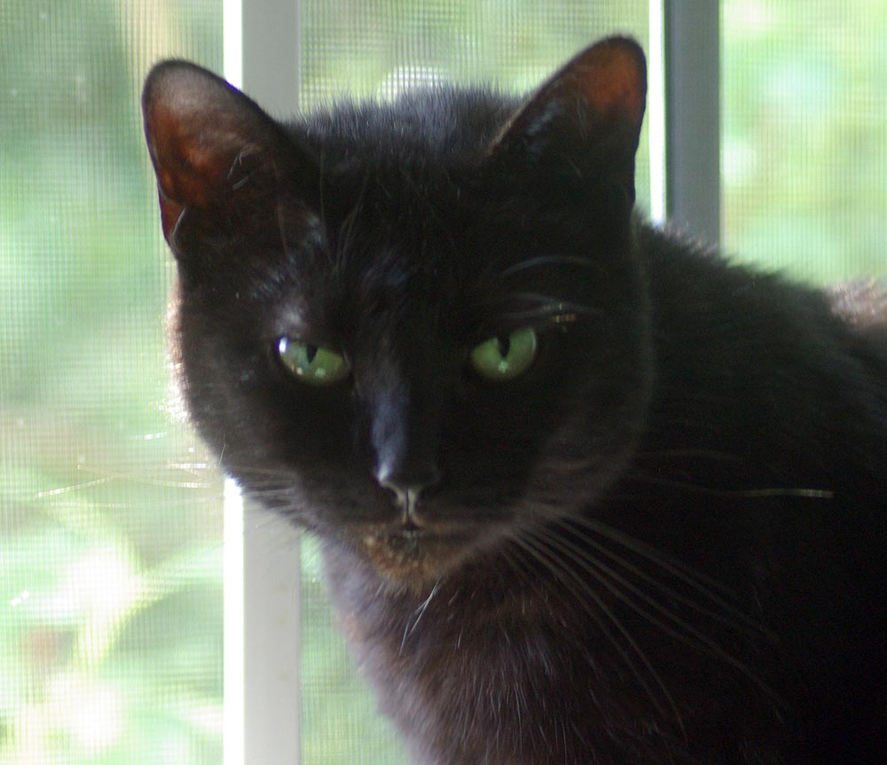 black cat with green eyes by window