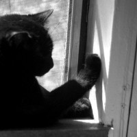 black and white photo of cat on windowsill