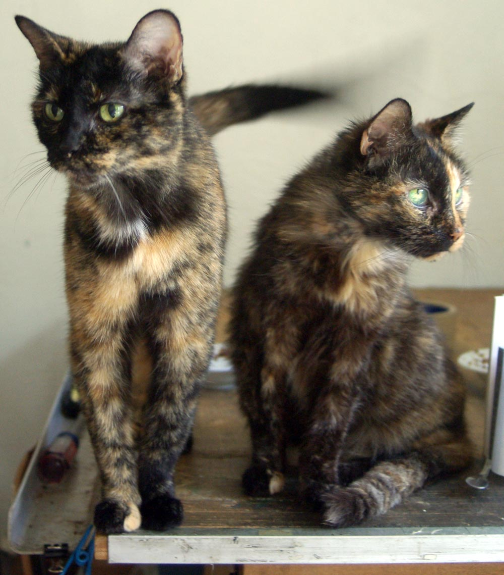 The creative cat daily photo reprise lunch first photos later maybe 2011 - Images of tortoiseshell cats ...