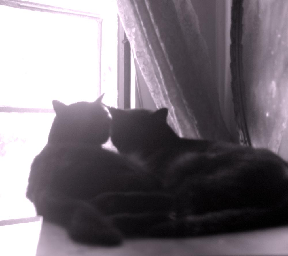 silhouette of two black cats by window