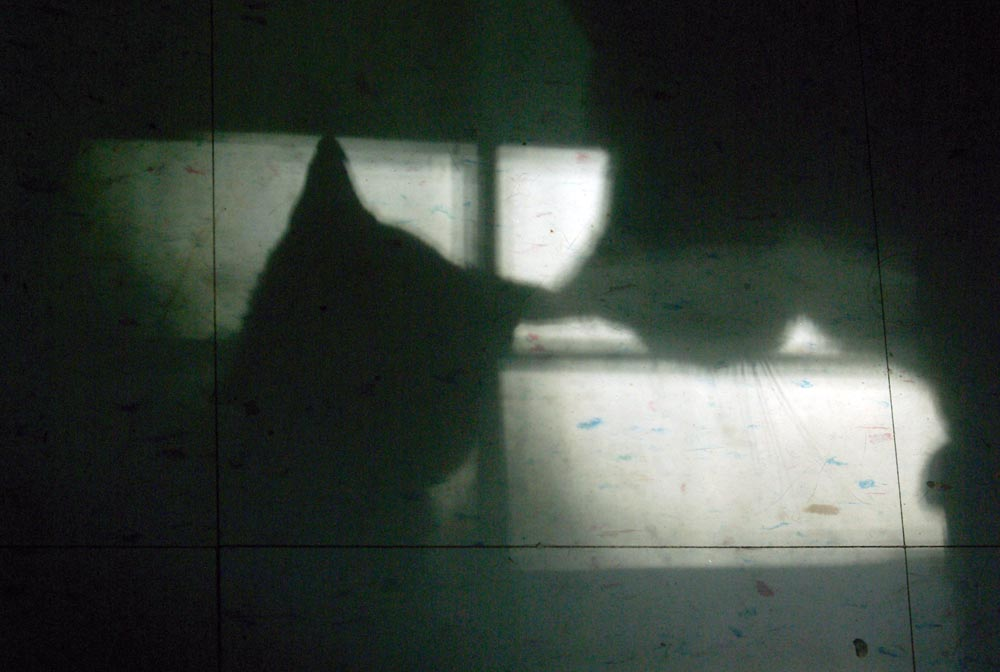 shadows of two cats