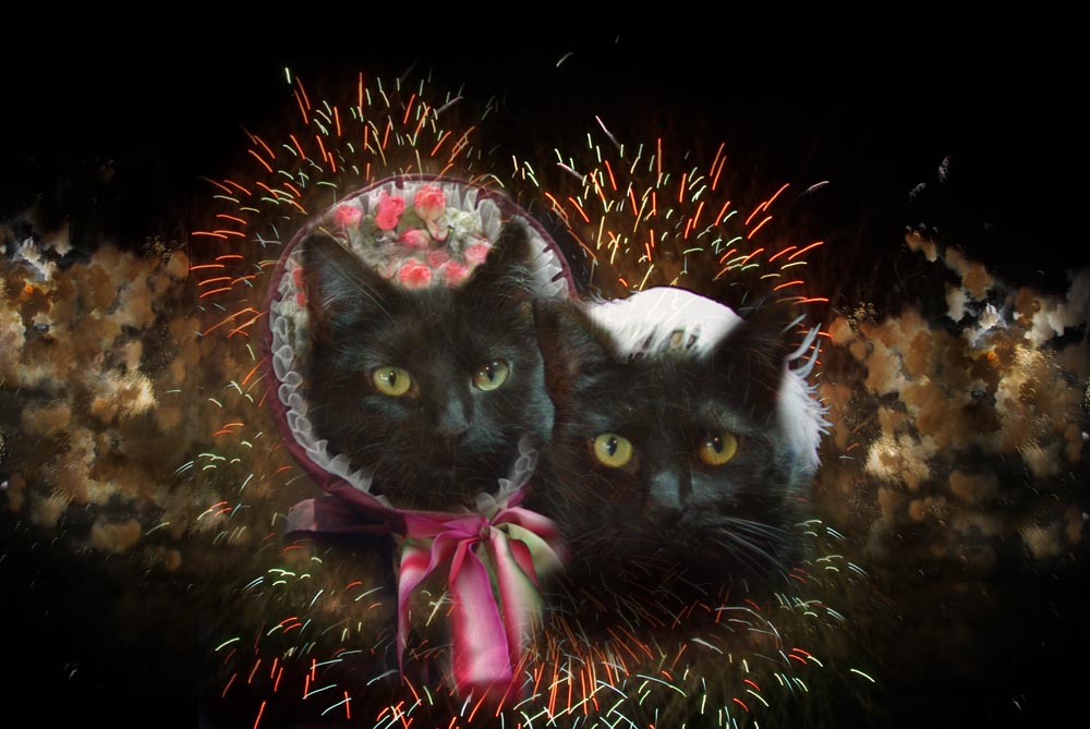 collage of two black cats in period dress