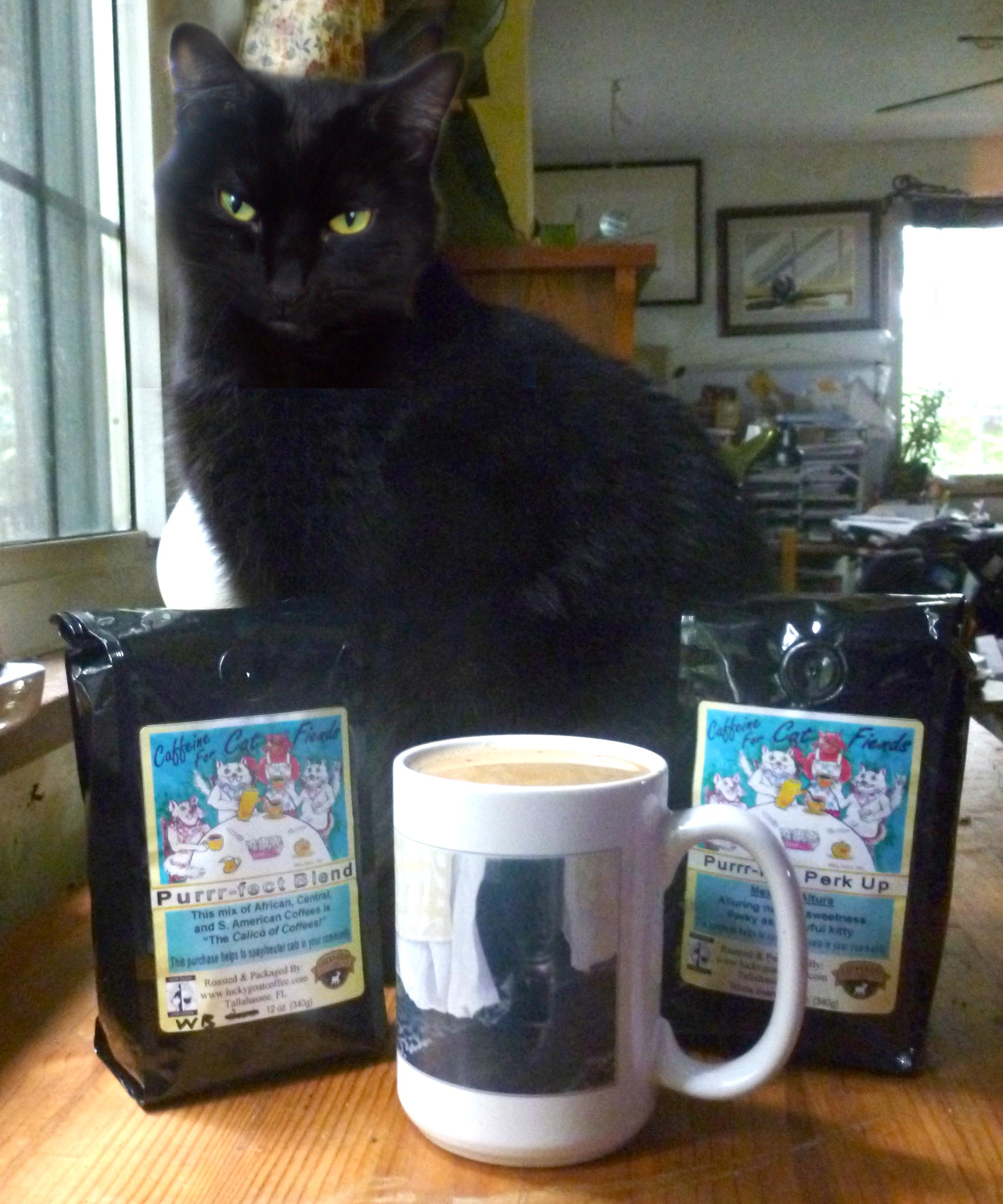 black cat with coffee