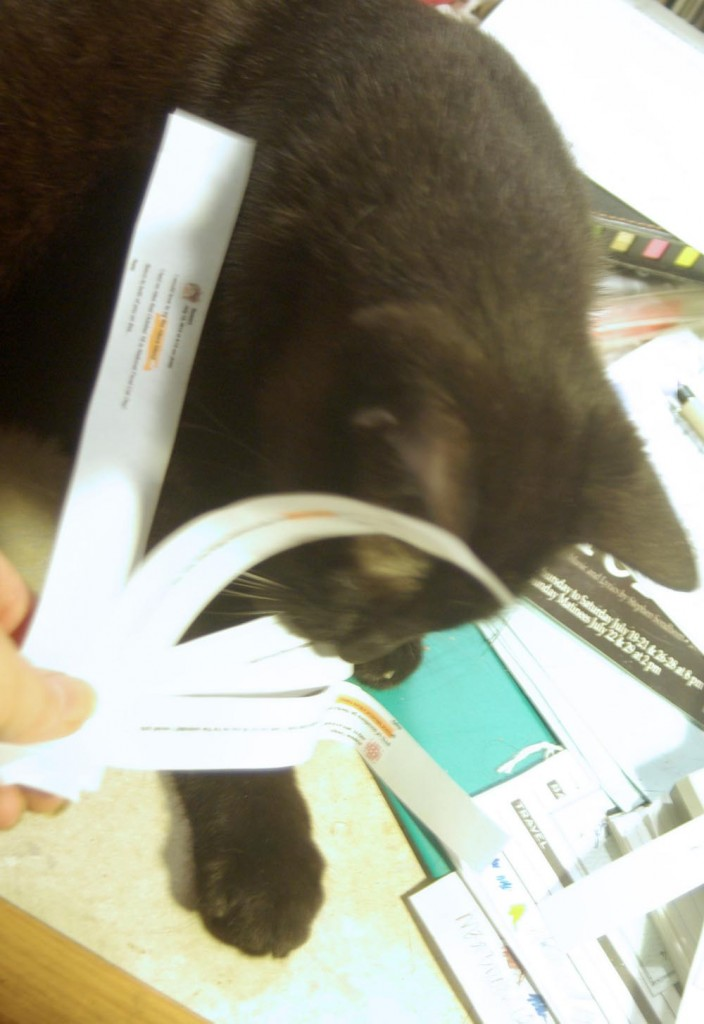 black cat holding paper strip