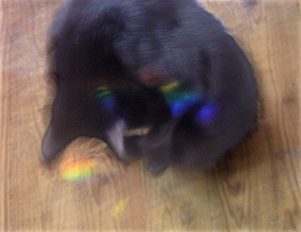 black cat with rainbows