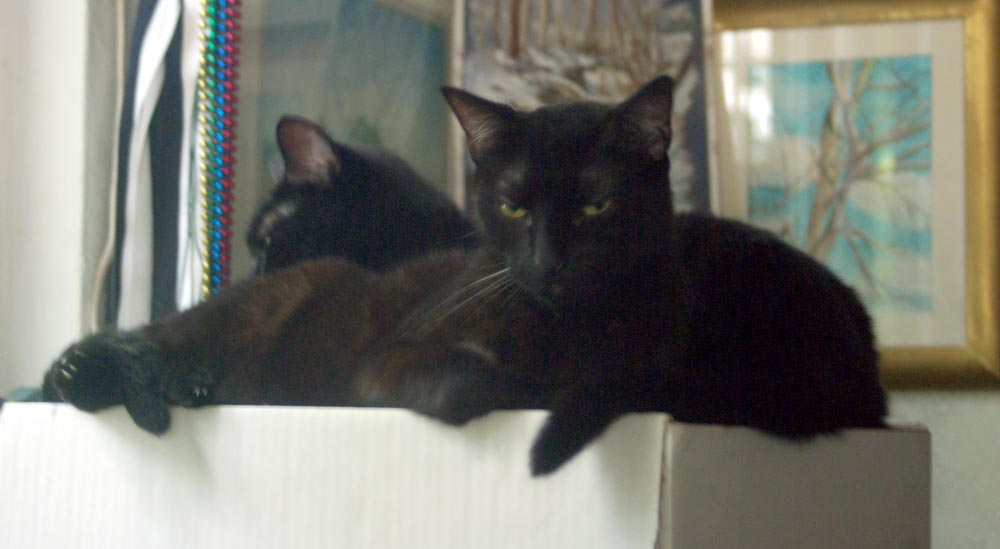 two black cats on box
