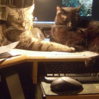 tabby cat and black cat on desk