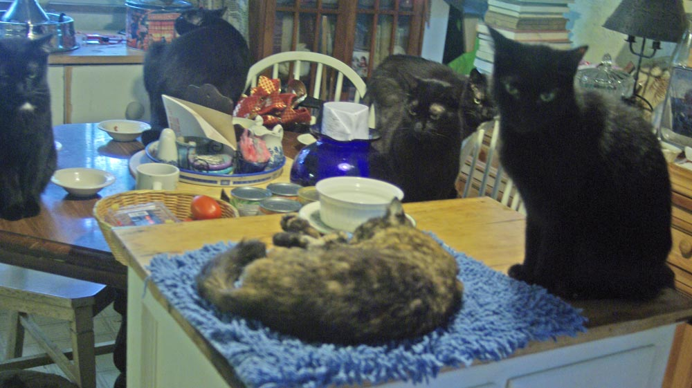 The five black cats gather to see Kelly (Mewsette already paid her respects).