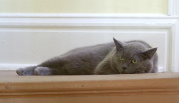 gray cat on steps