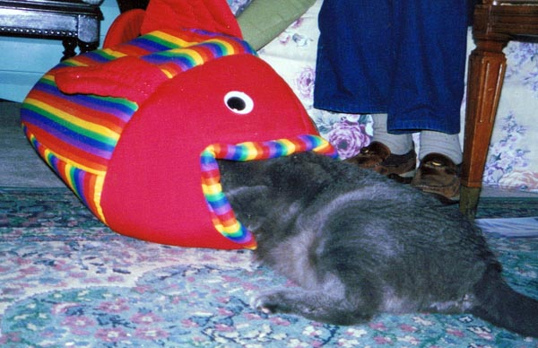 gray cat with fish-shaped bed