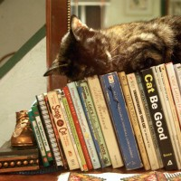 tortoiseshell cat sleeping on books