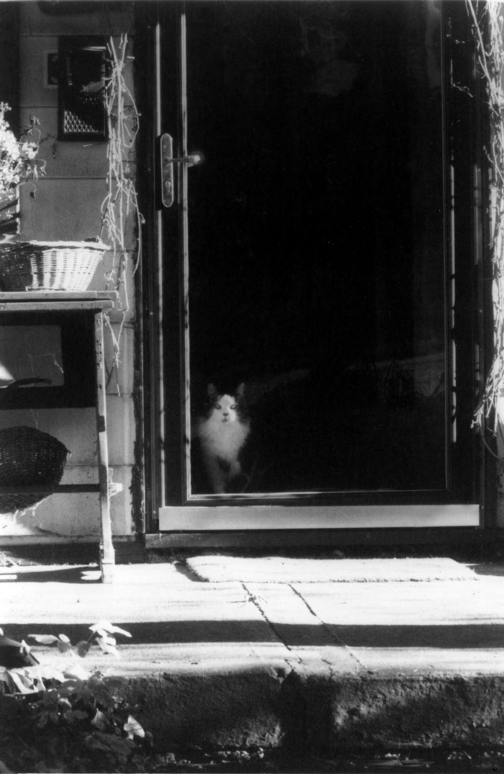 black and white photo of cat in door