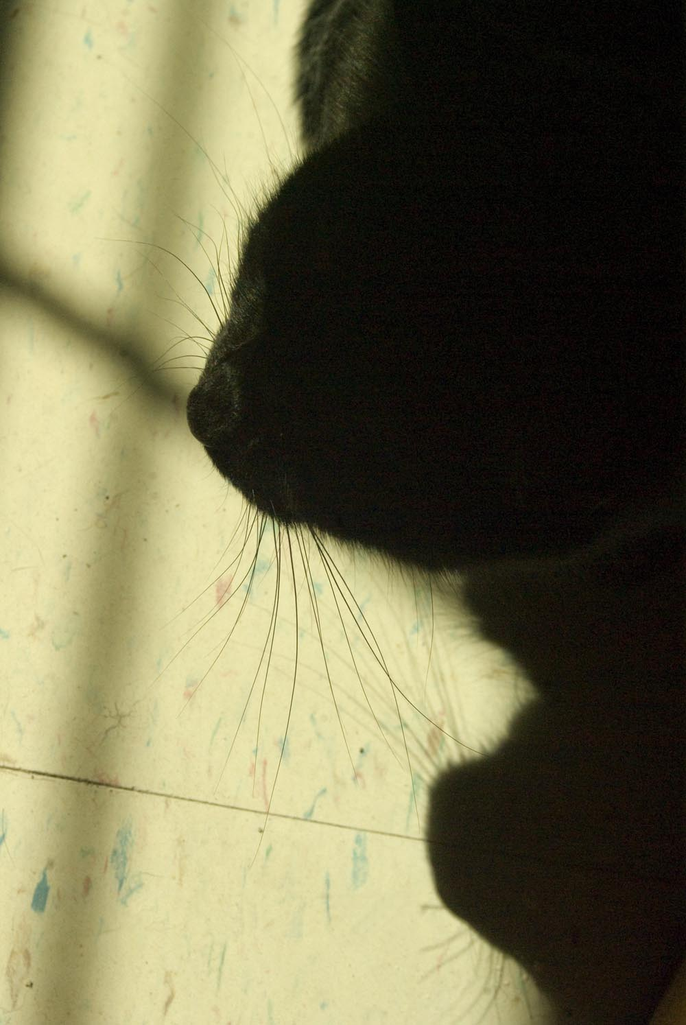 photo of cat's nose and whiskers and shadow